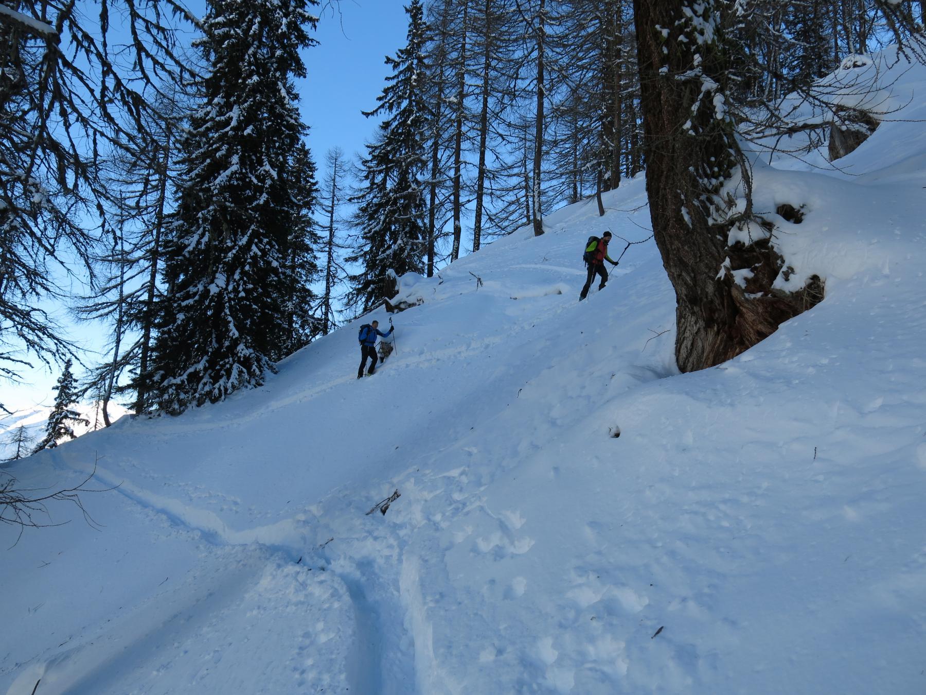 nel bosco superiore più rado si riesce a sciare