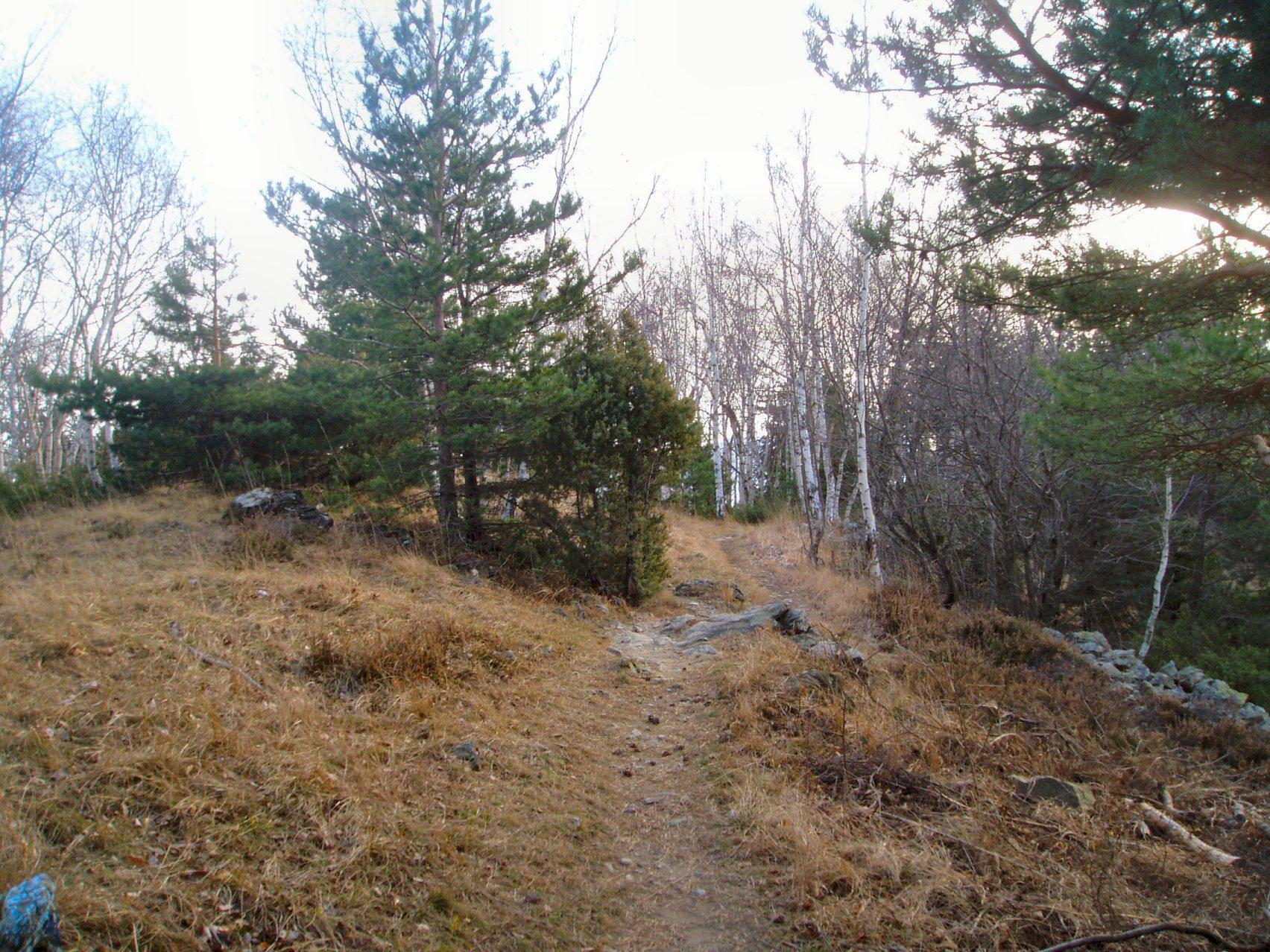 sentiero in discesa