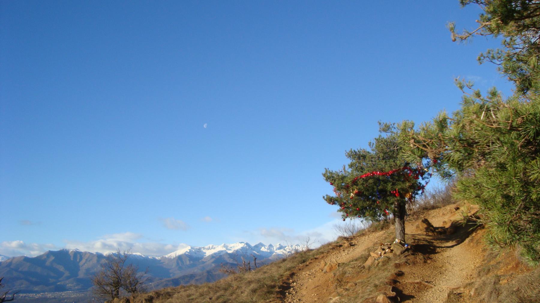 panorama e albero decorato