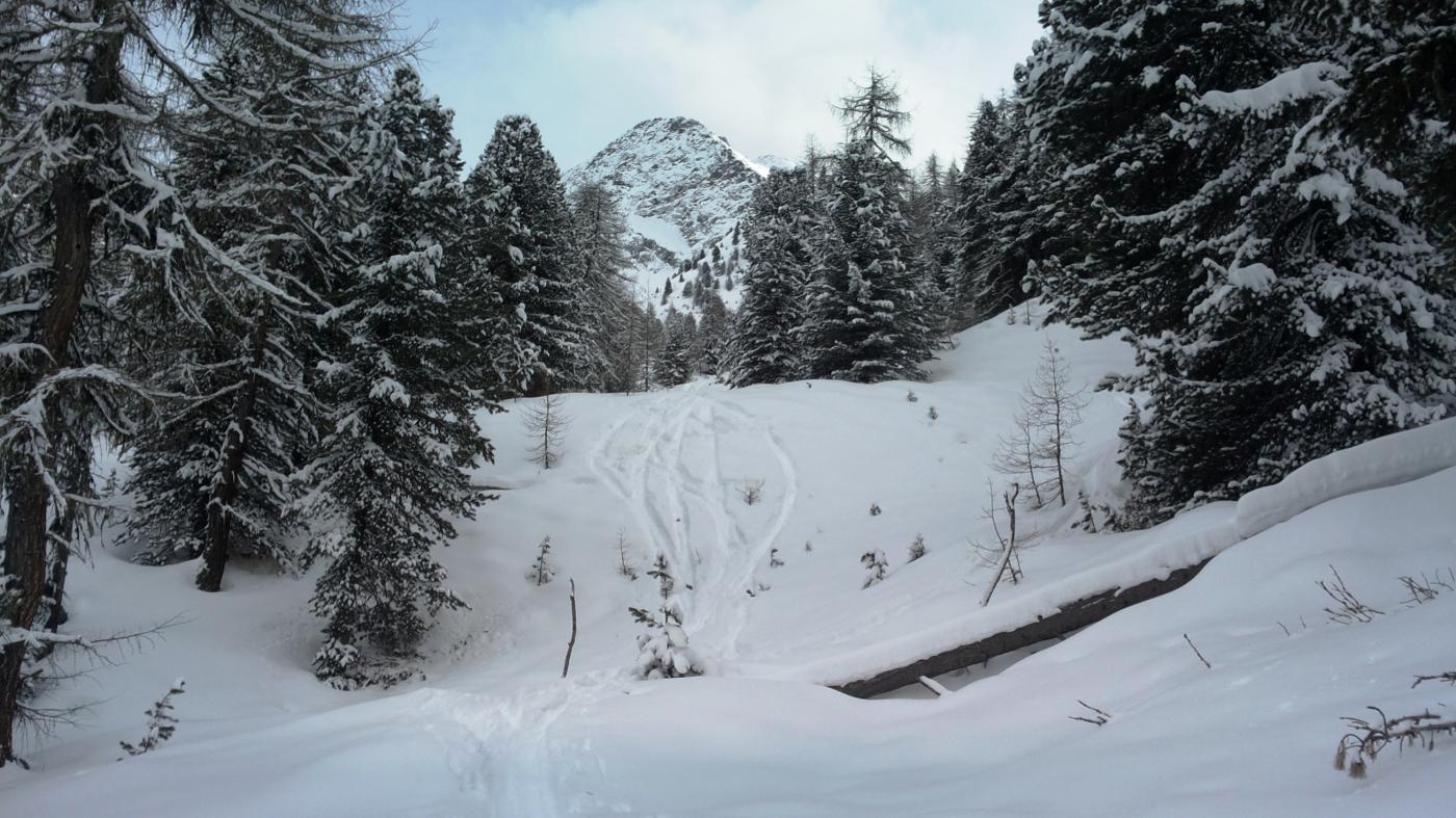 bella neve nel bosco sotto lo Chamolè