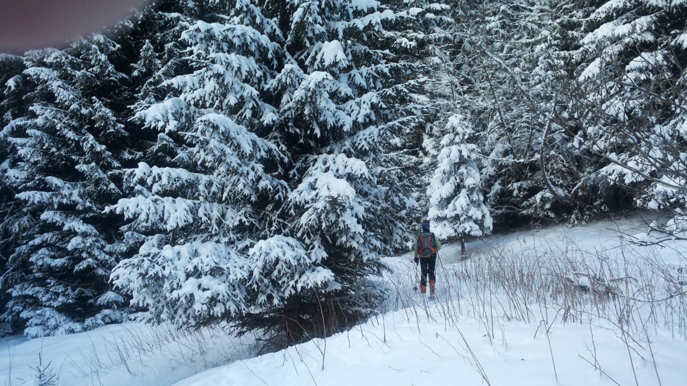 entrando nel bosco