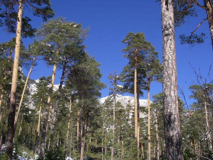 foresta innevata dopo la Roche de l'Ombre