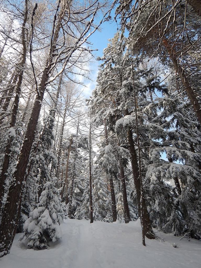 Sentiero nel bosco prima del Rey
