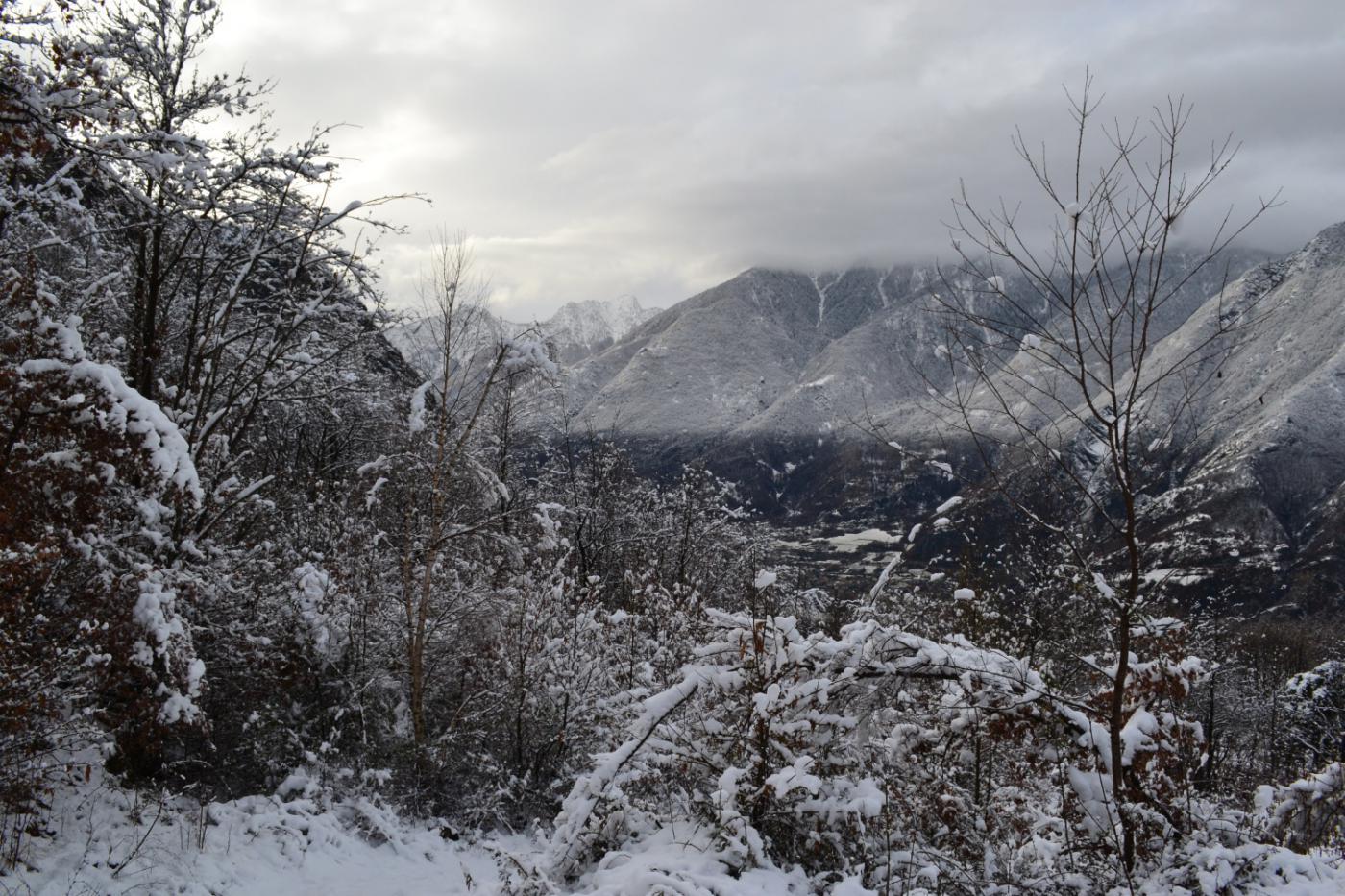 ancora tante nuvole ed alberi carichi di neve