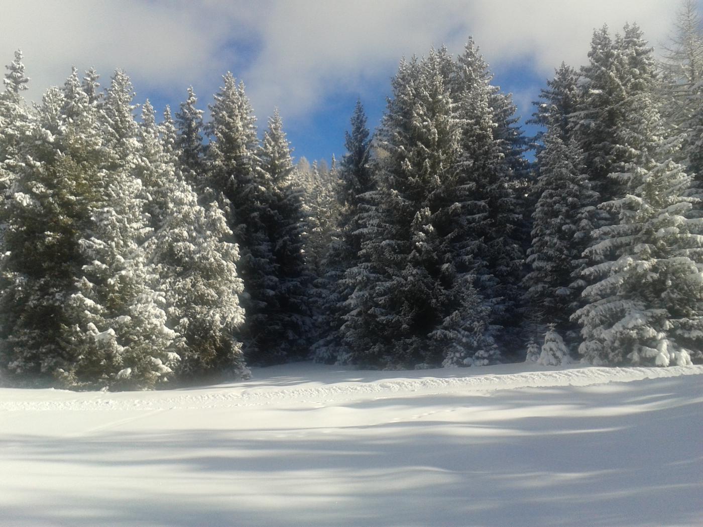 bosco incantato