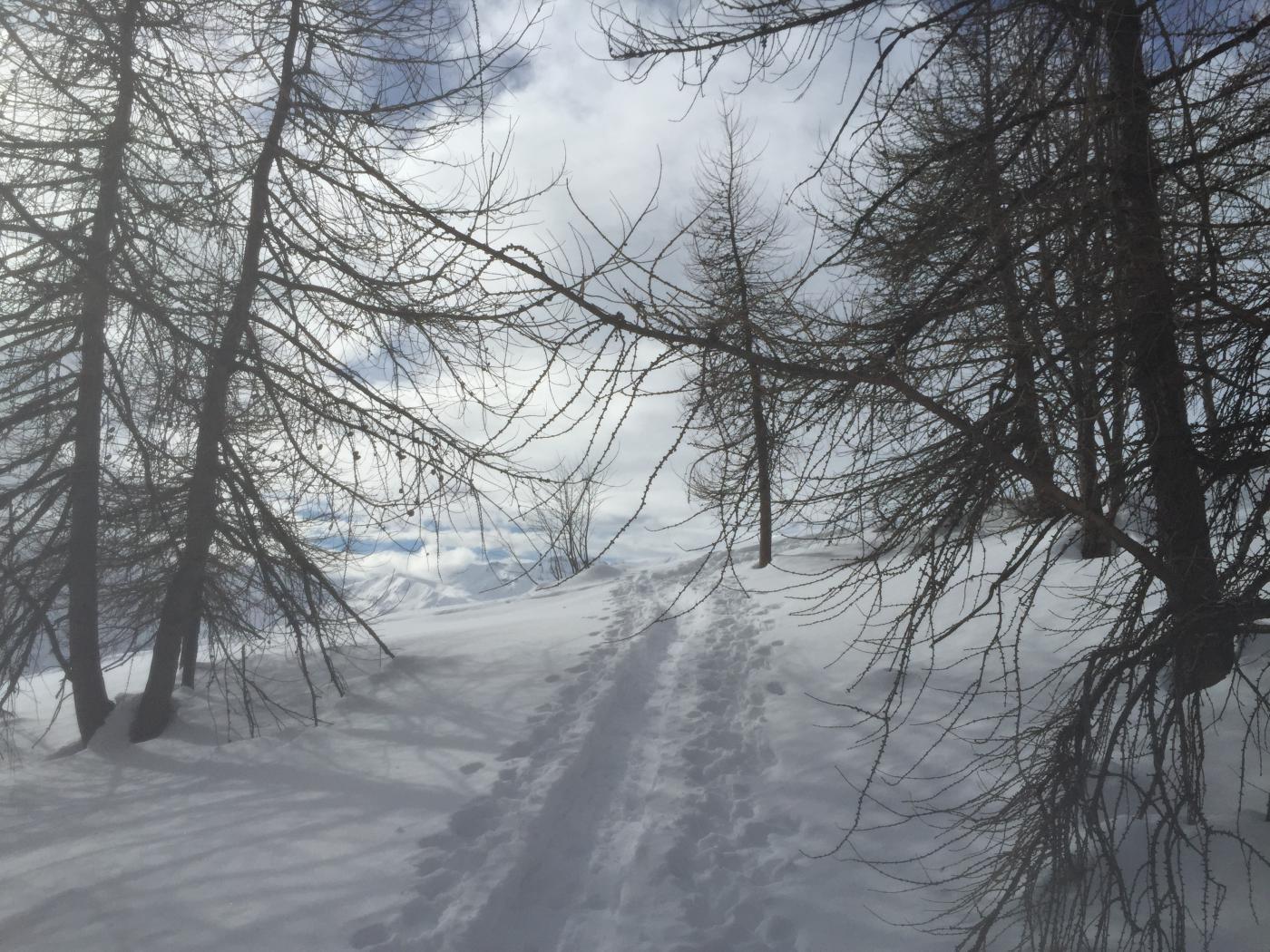 Uscendo dal bosco