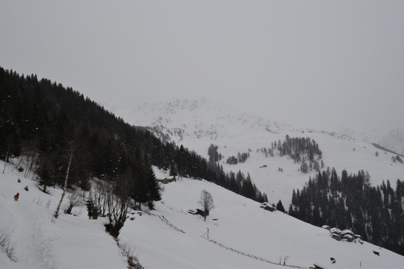 verso il Rifugio Alpe Piazza