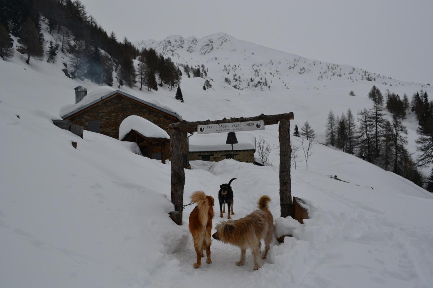 incontri canini al rifugio