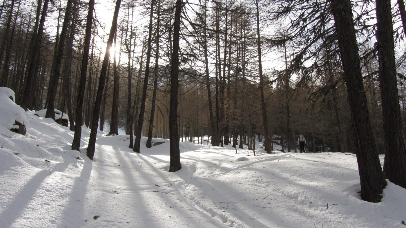 Il bel boschetto