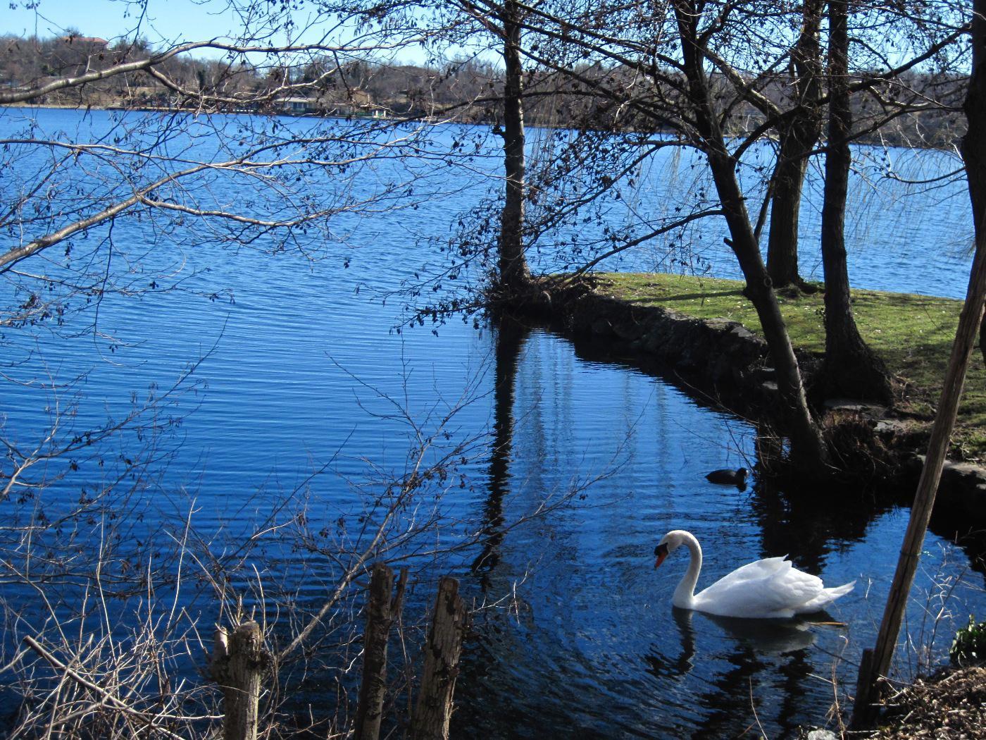 Cigno al lago Sirio