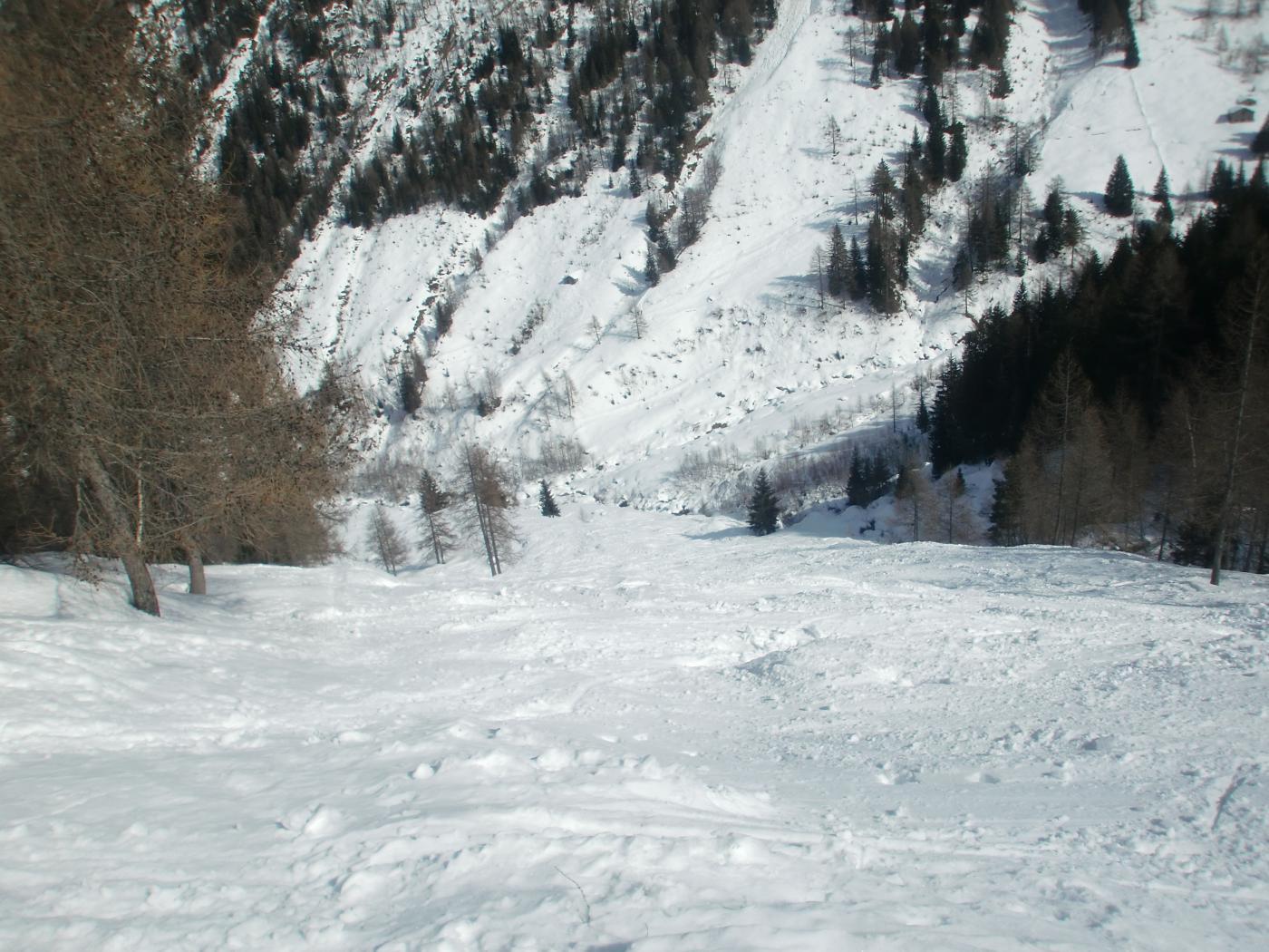 Ultimo tratto di bosco (sinistra orografica Val Lunga) con neve primaverile