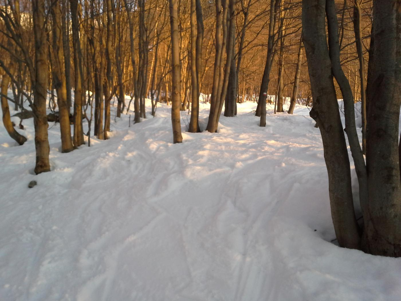 L'alba nel bosco...