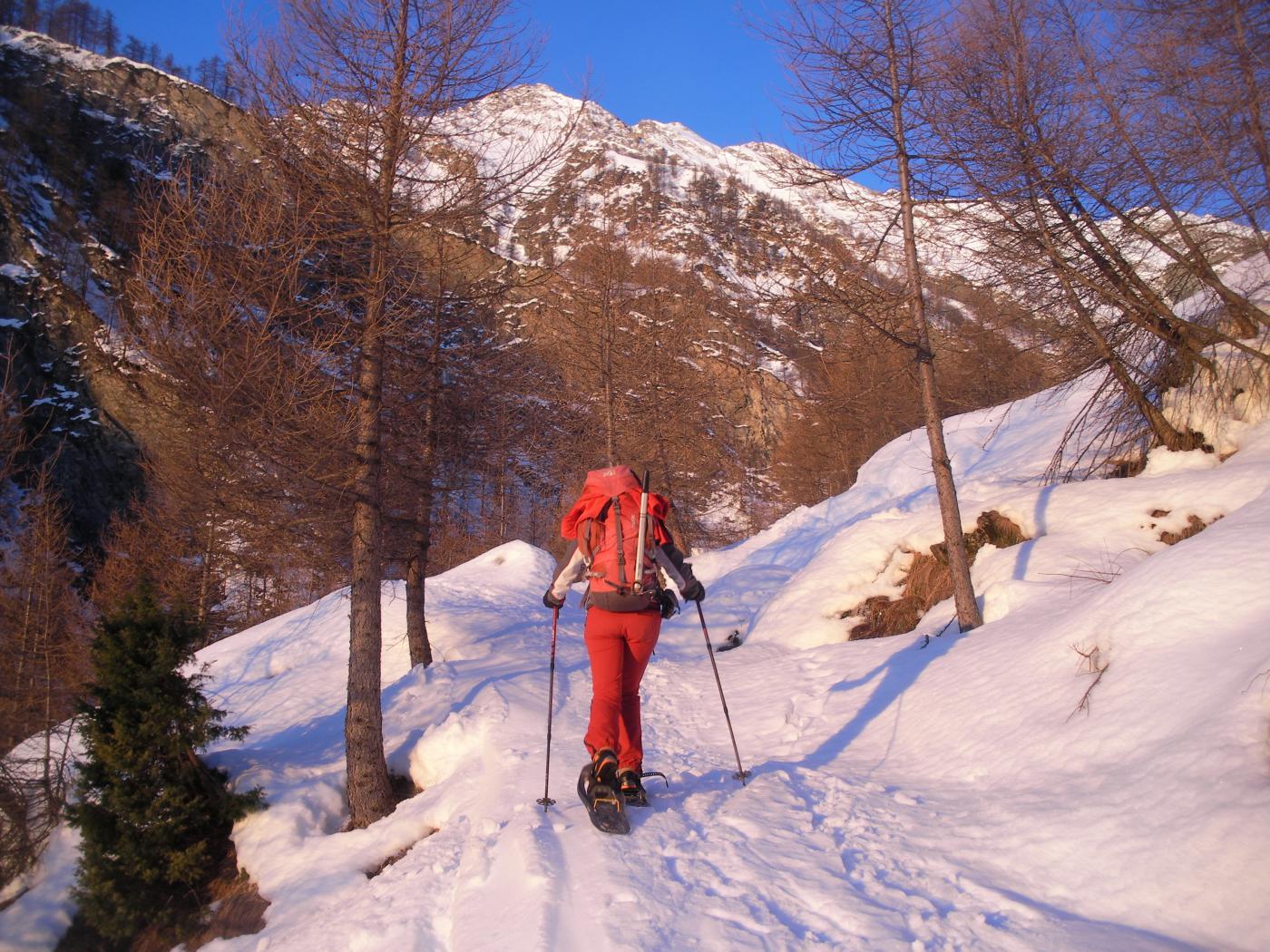salendo all'alpe Crosenna nelle belle luci del mattino