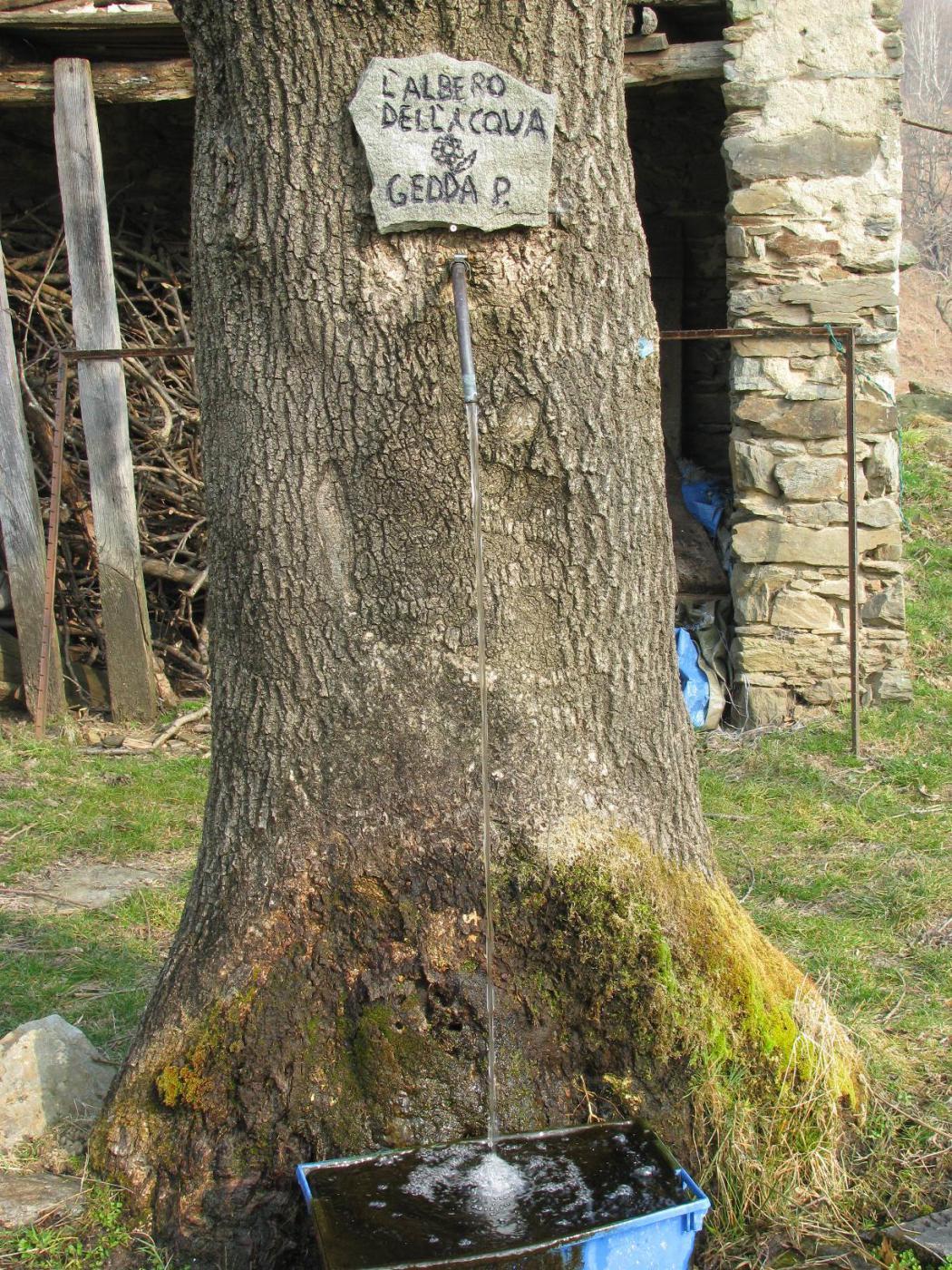 L'albero dell'acqua a Pian Parietto