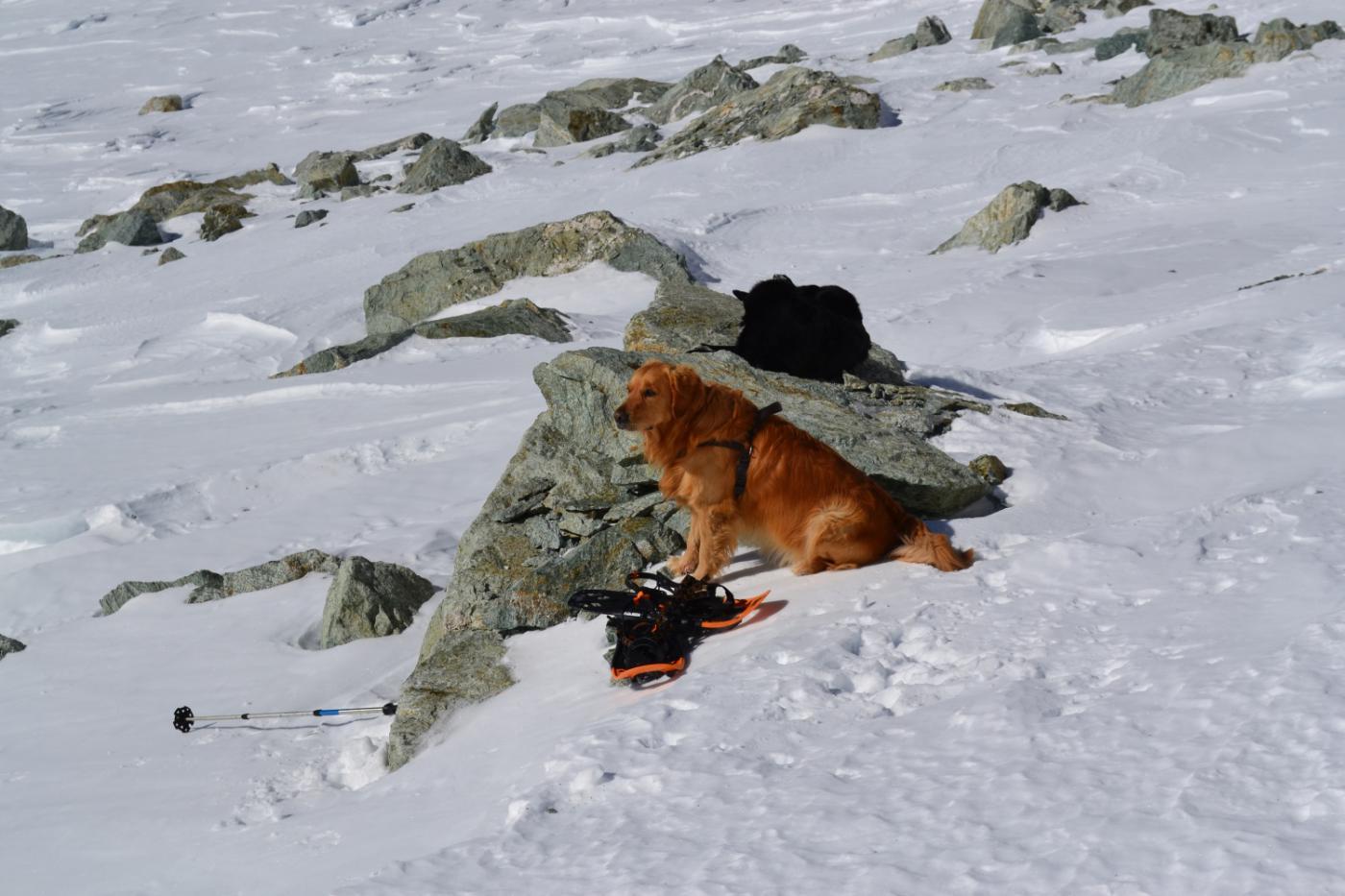 Zeus al riposo qui dopo l'incidente