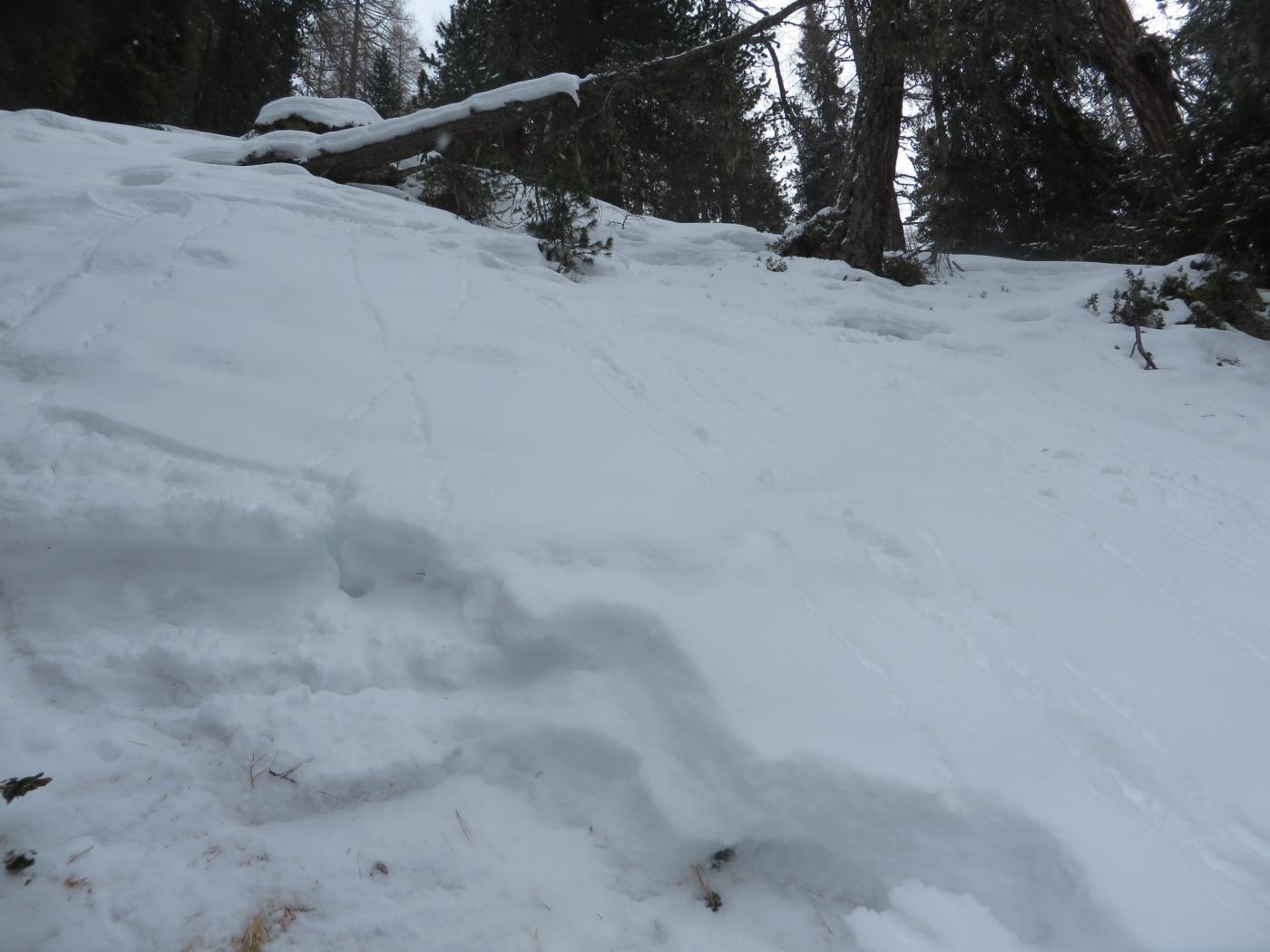 neve tipo sale nel bosco.