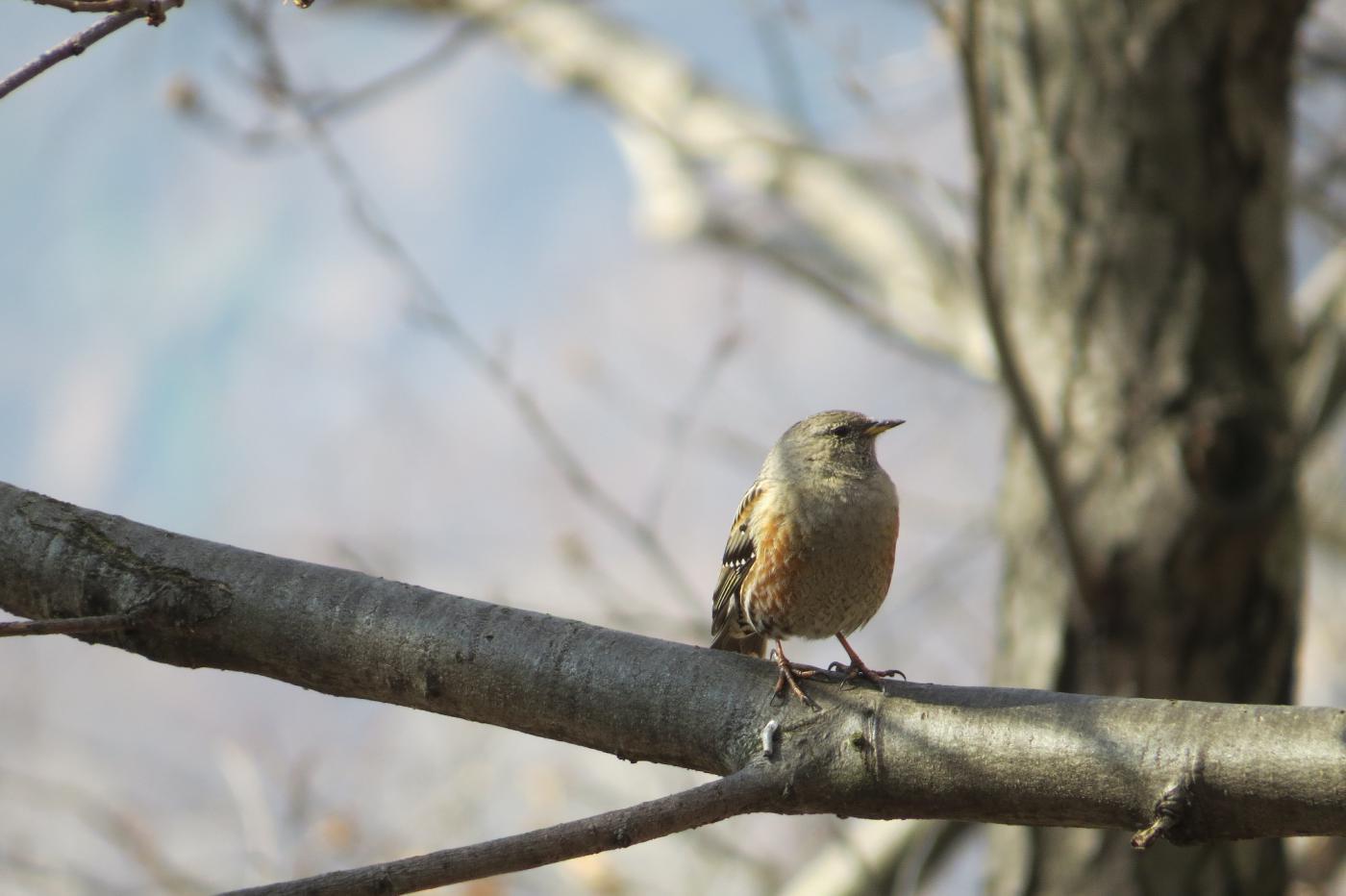 Uccellino cantarino, nel bosco