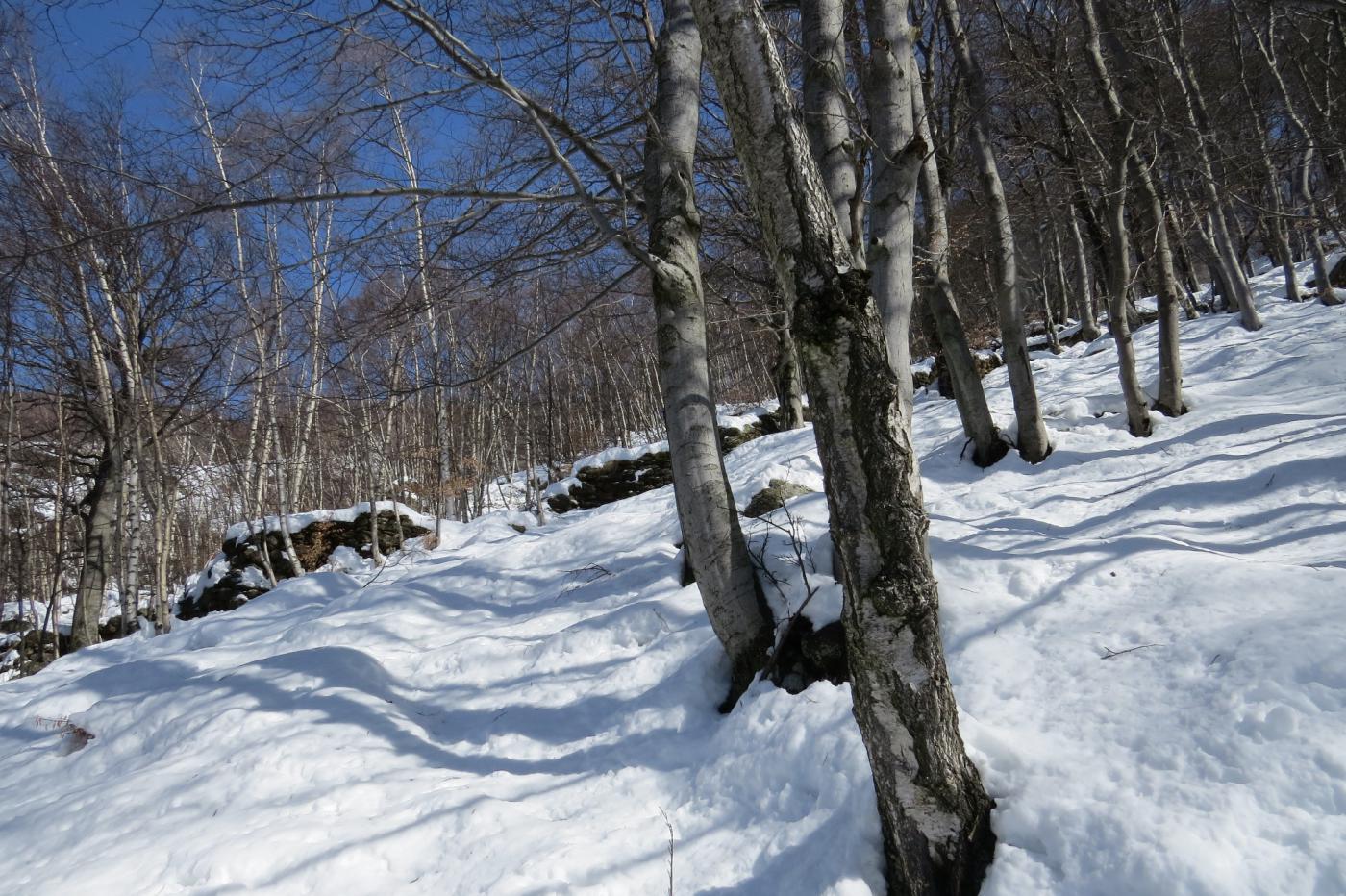 Si sale nel bosco