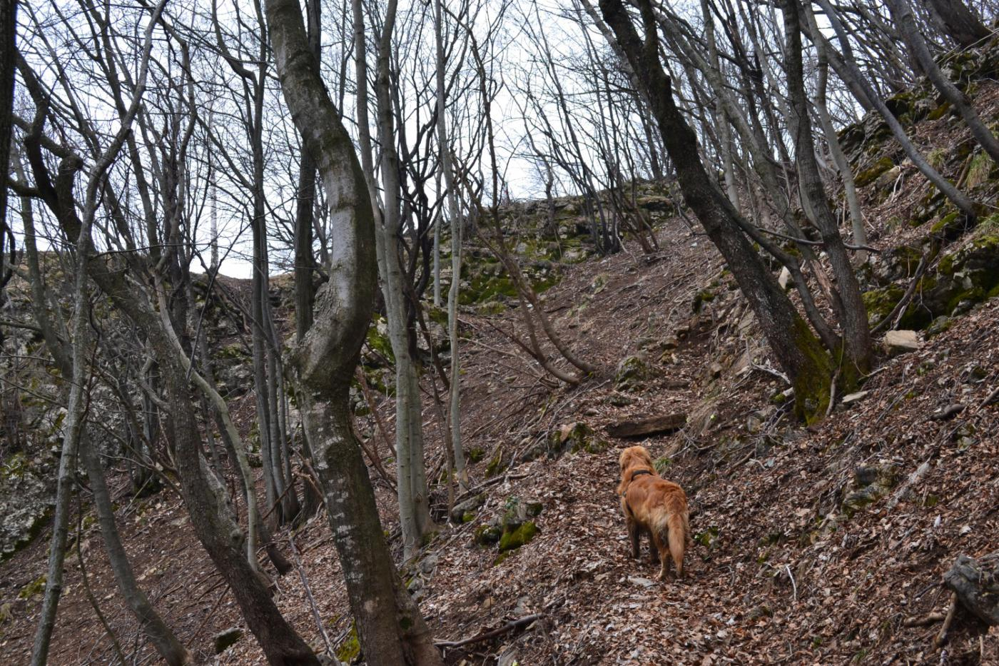 in prossimità della cresta uscendo dal bosco