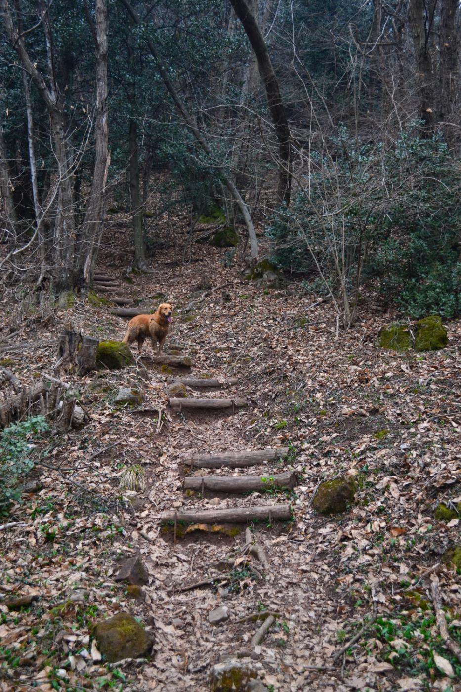 tratto scalinato del sentiero