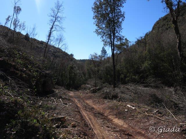 Taglio bosco lungo la strada per Le Manie