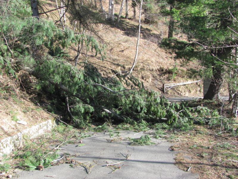 I danni del vento dei giorni scorsi