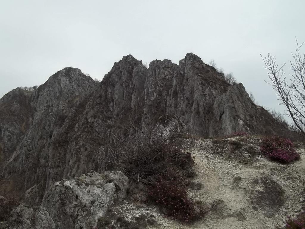 cresta del Moregallo