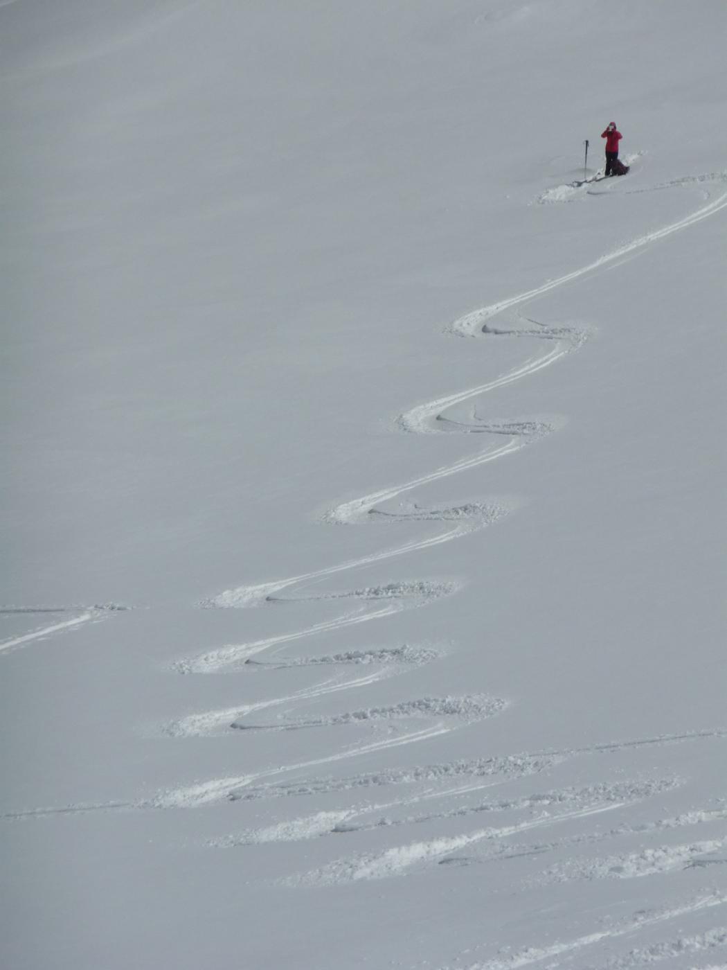L'impavida testa la neve