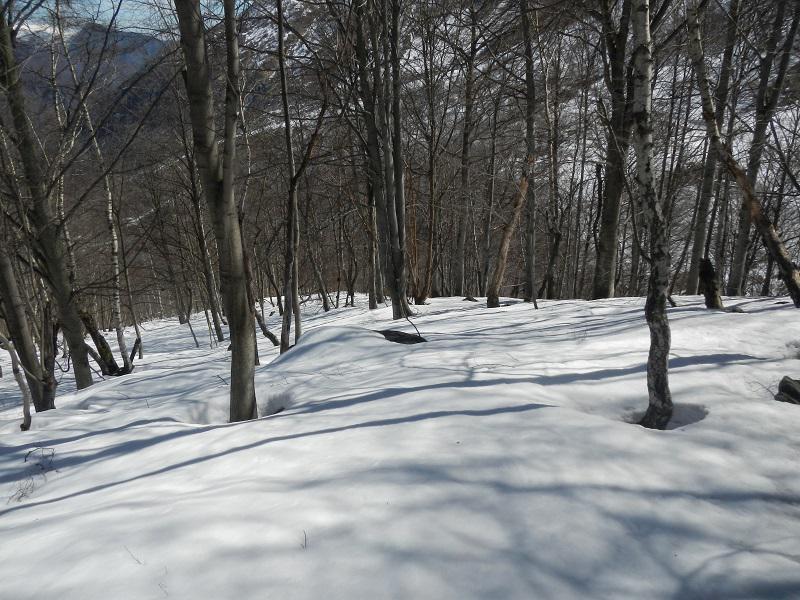 bosco sciabile