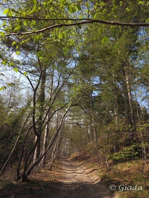 Sulla forestale prima del Bocchin del Praè