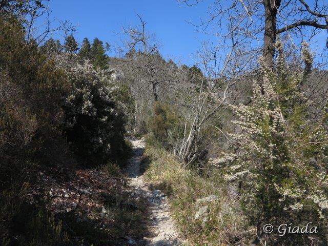 Sentiero di salita verso il Bocchin del Praè