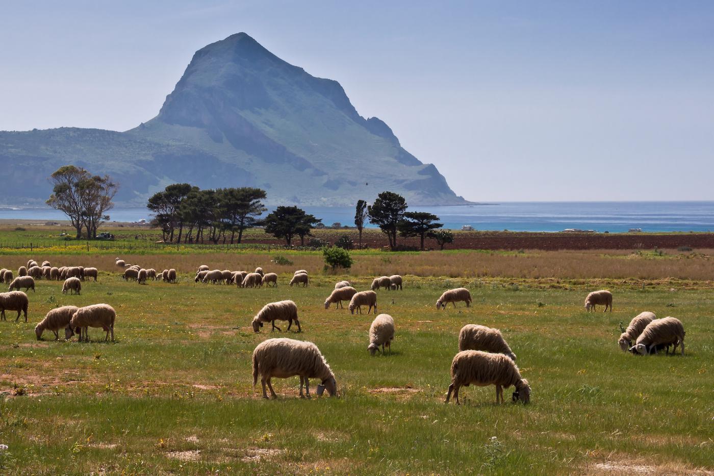 la baia di S.Margherita con il monte Cofano