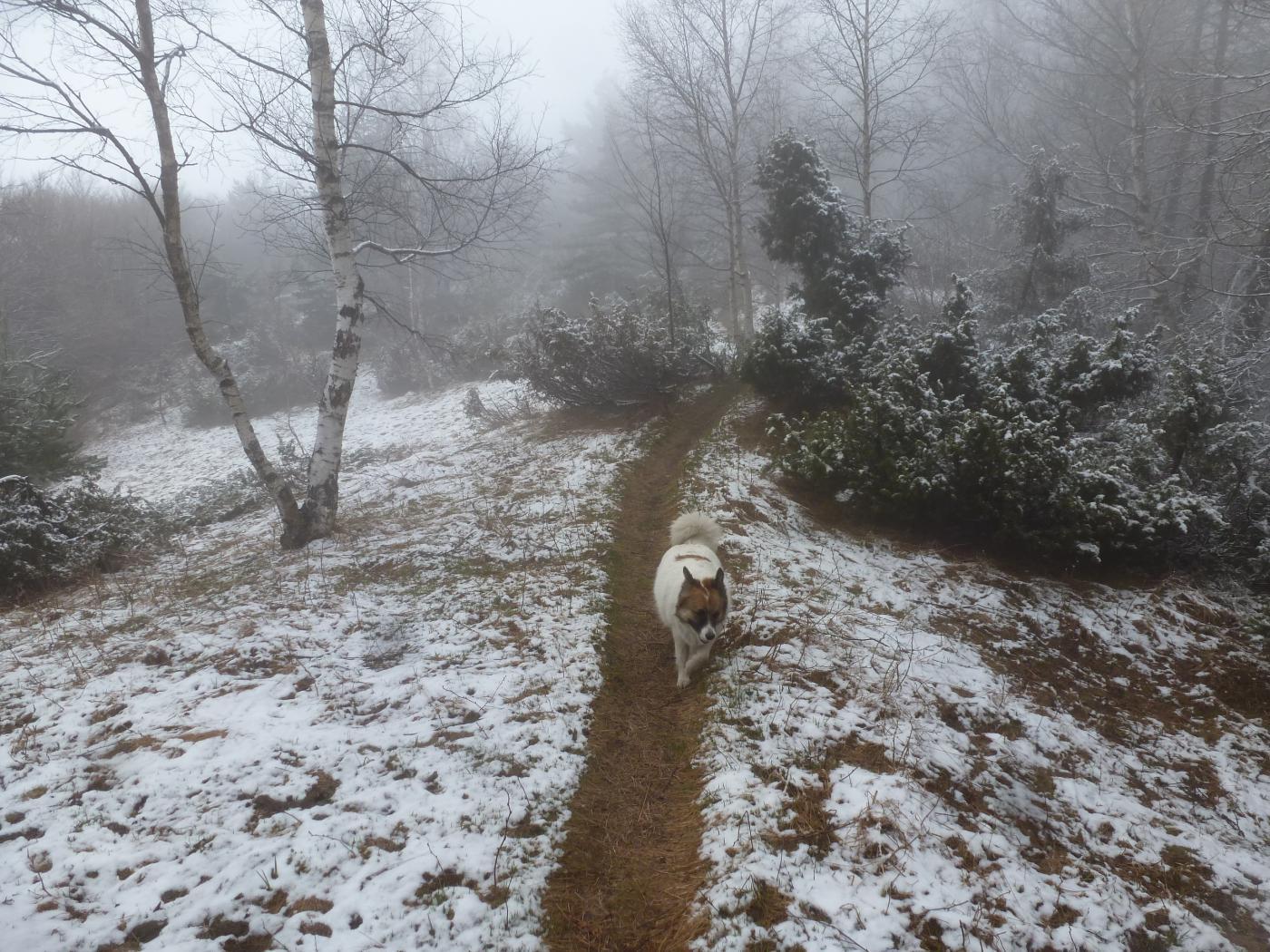 spolverata di neve