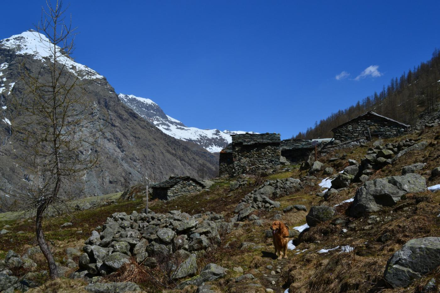 arrivo all'Alpe Pian Salè