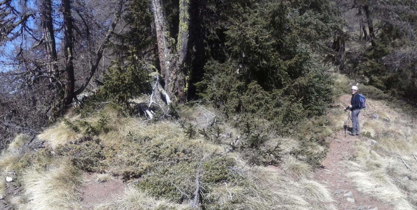 in salita nel bosco  sul sentiero n.2...