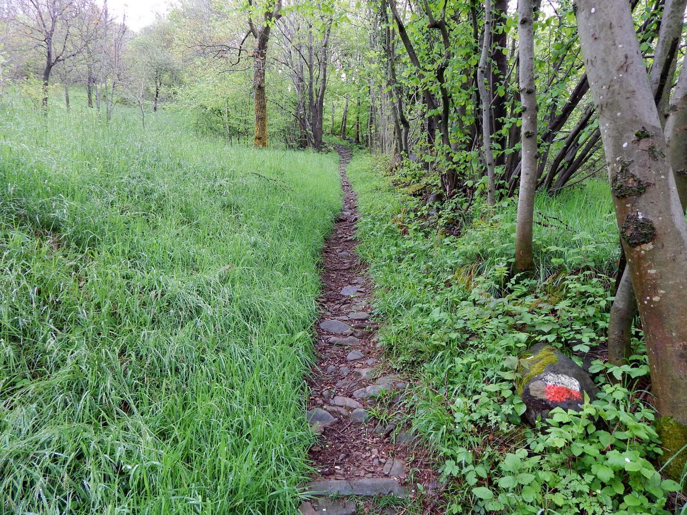 Prima parte del sentiero