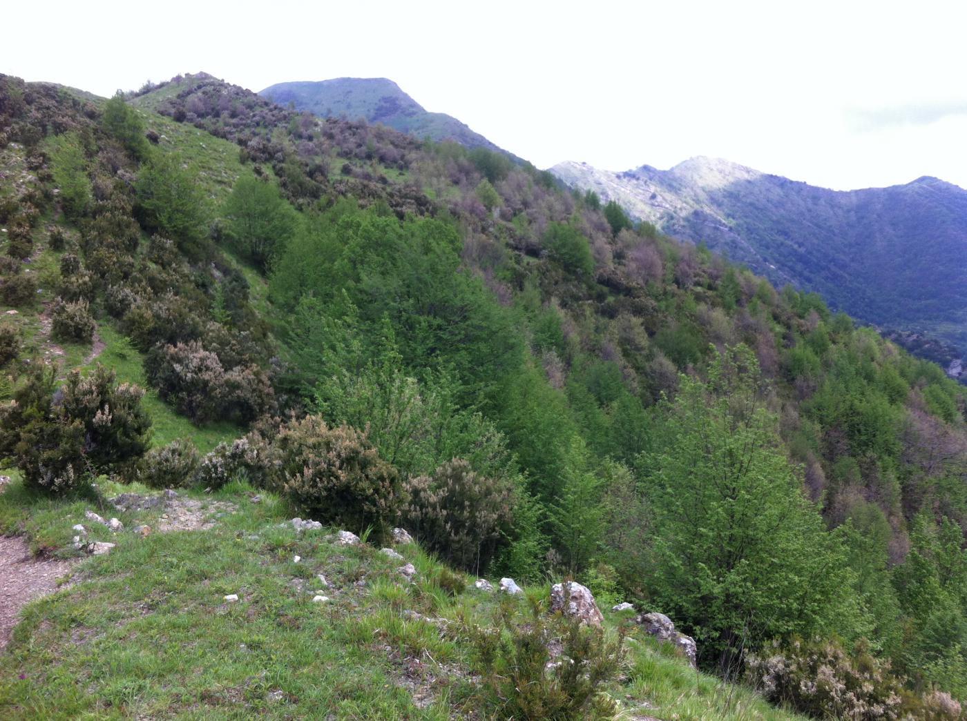 Alpesisa al centro,con cresta di salita. A dx Monte Lago e discesa su Canate
