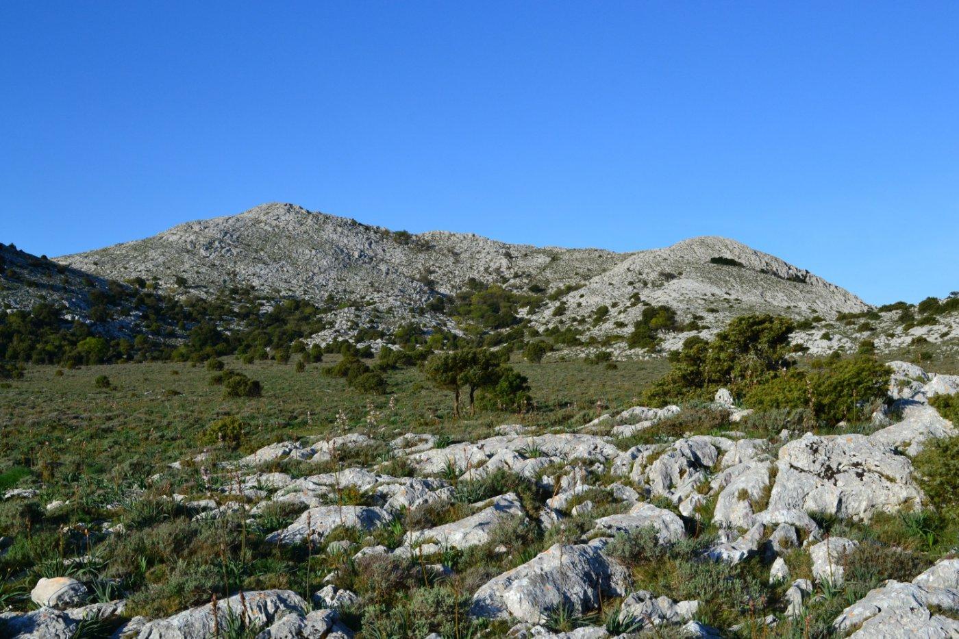 l'altipiano di Su Campu 'e Susu con la Punta Catirina a sinistra