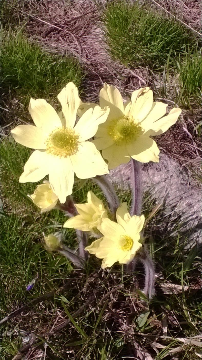 spettacolo anche nella fioritura