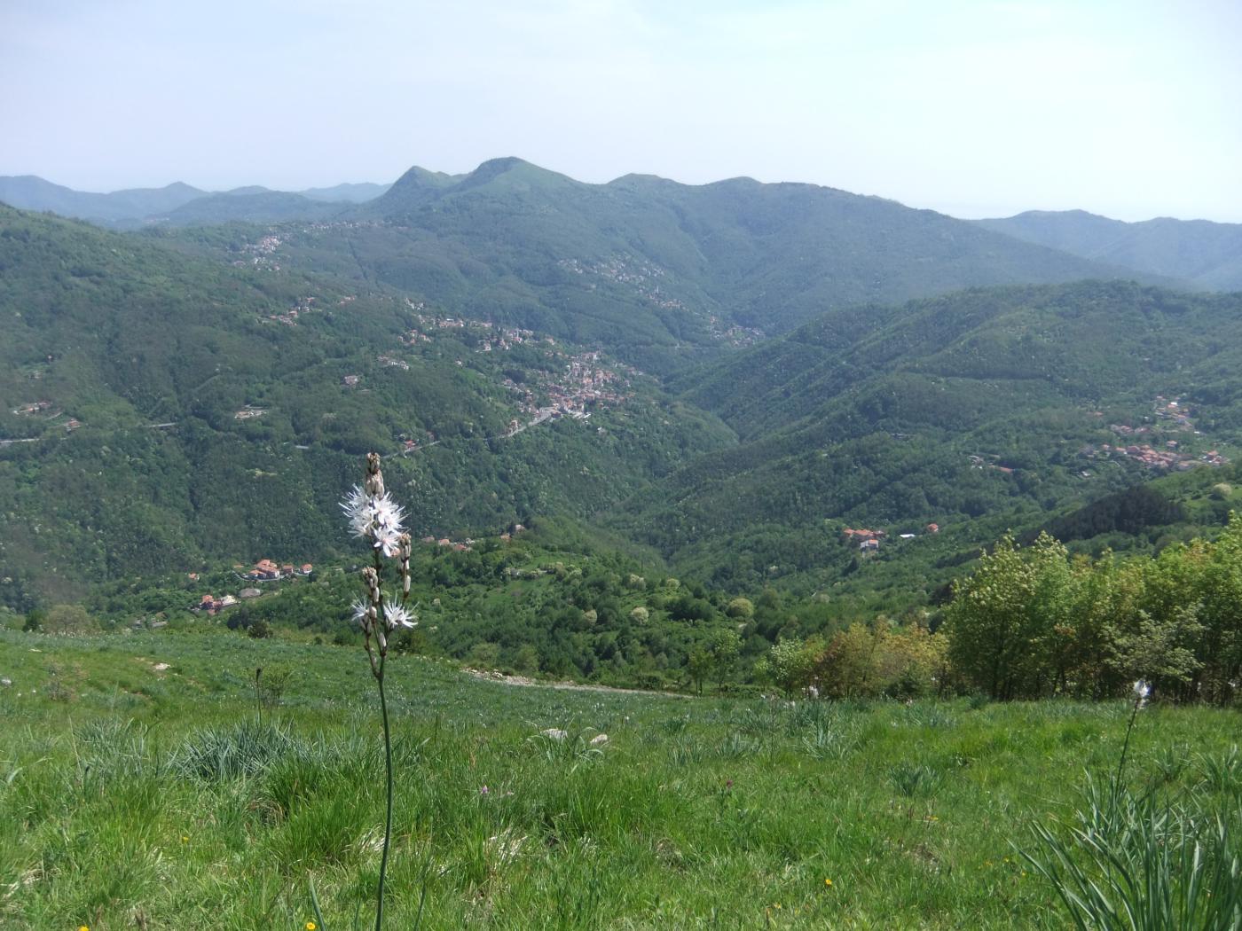 Bassa Val Bisagno