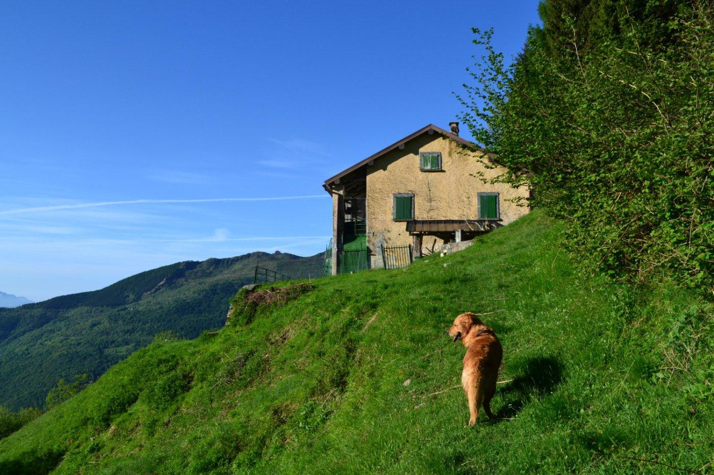 arrivo al Rifugio Vincino (1168 m)