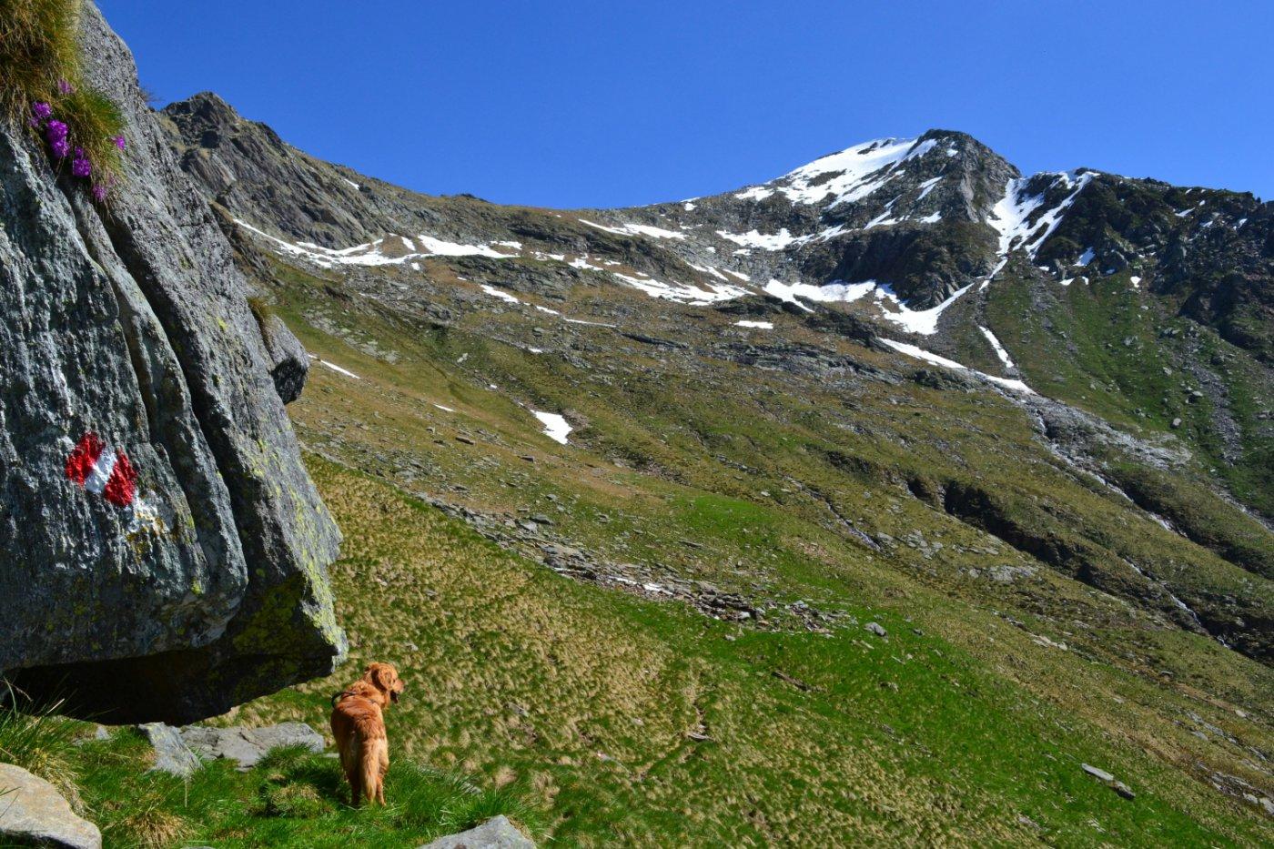 in vista dell'Alpe Paìna con il Cardinello sullo sfondo