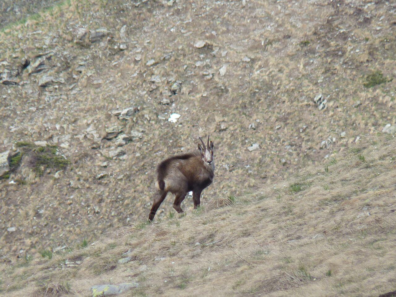 sempre elegante vederlo muoversi in montagna