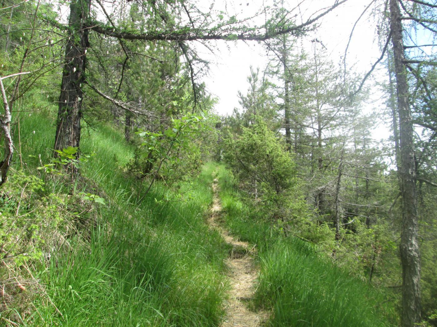 lungo il sentiero Frassati