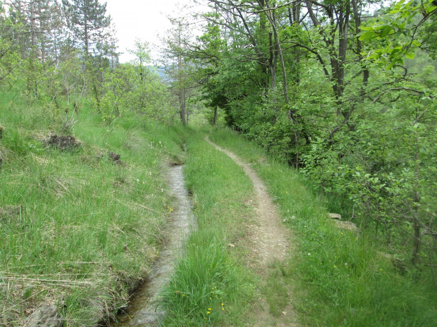 piacevole sentiero lungo un piccolo canale