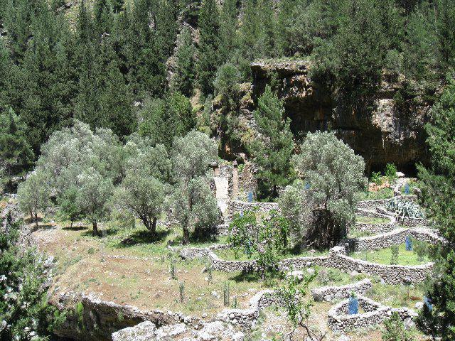 coltivazioni nel vecchio villaggio di Samaria
