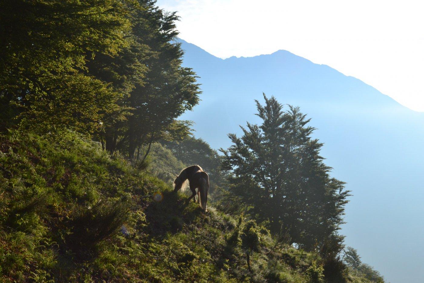 sul sentiero verso l'Alpe Leciuri