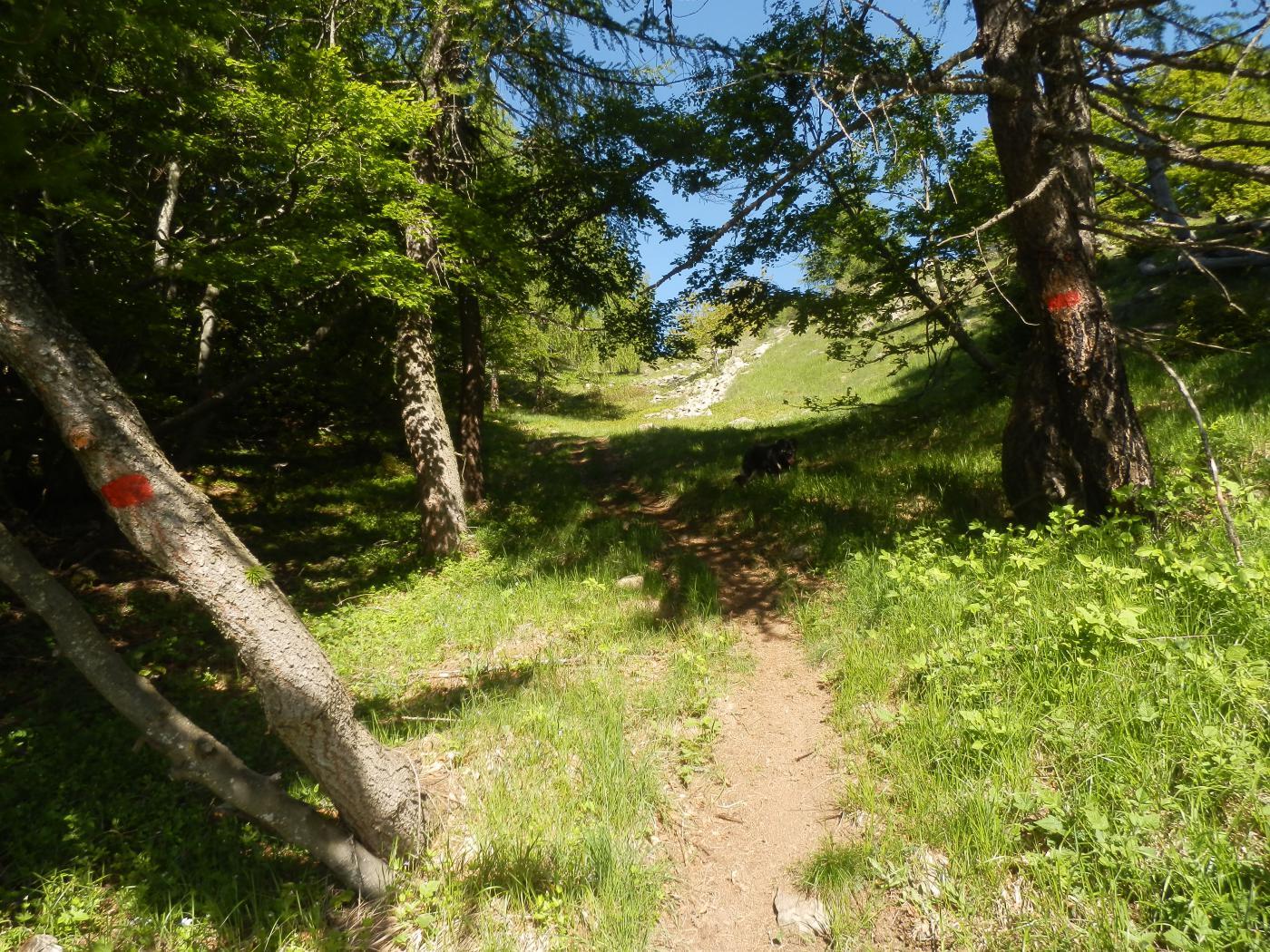 il sentiero che parte da Neraissa Inf; molte tacche rosse lo segnalano