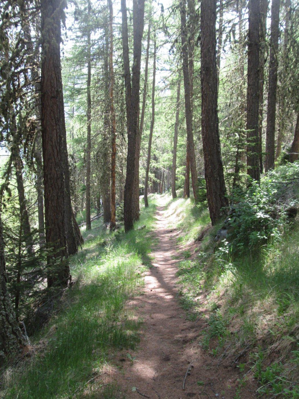 il bellissimo sentiero nel bosco