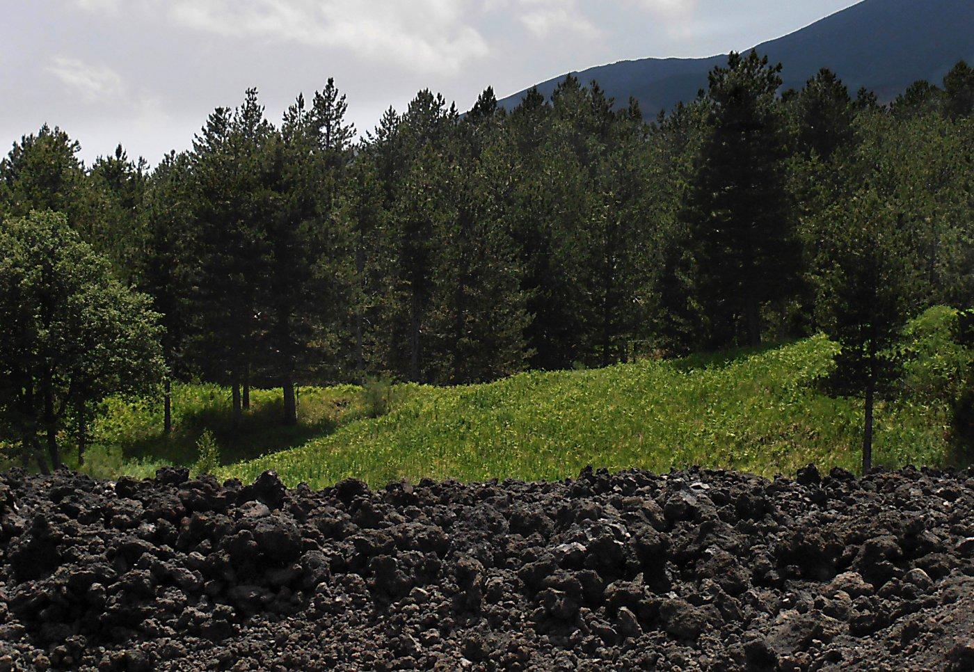 il bosco lungo il percorso